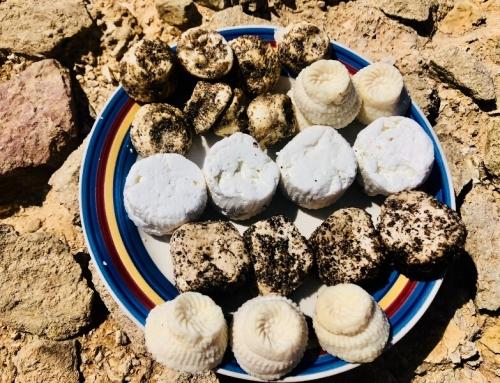 Sheep cheeselets in Malta